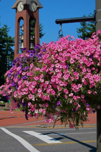 clock tower and flower basket