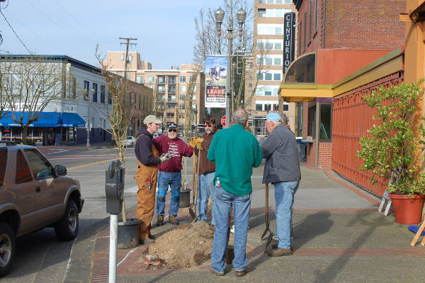 peple planting trees downtown