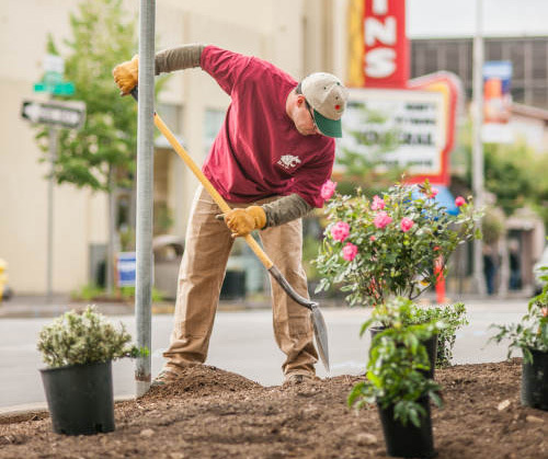 volunteer digging whole for flowers